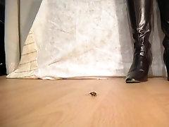 Tammy and bug